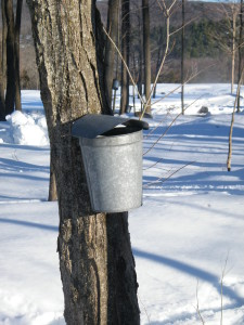 Syrup Pictures- 2-25-14 009